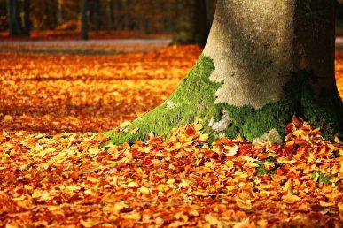 fall-foliage-1913485_1920-1024x683